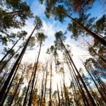 Waldspaziergang 6