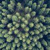 Wandbild: Wald von Oben 3