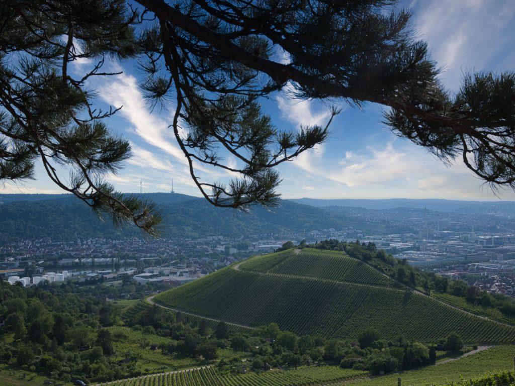 Weinberge Fotografieren in Stuttgart